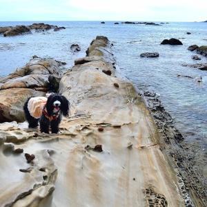竜串海岸をお散歩してSATOUMIへ