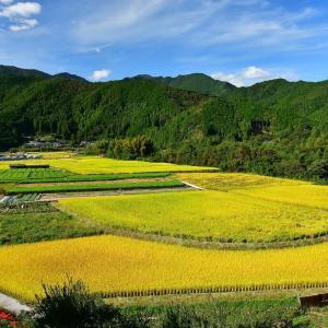 吉野川の田園風景