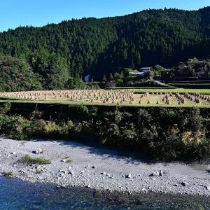 地蔵川沿いの田んぼ風景