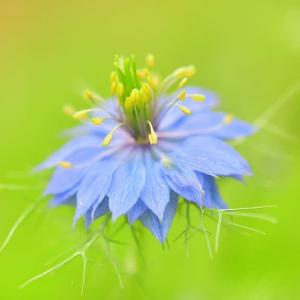 牧野植物園の、色々お花