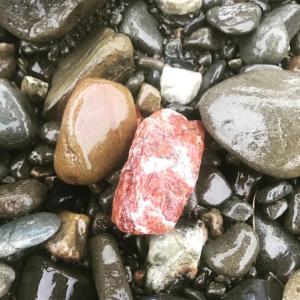多摩川で石を拾ったら、実は種類がたくさんで買う必要なし。茶室の露地を作るプロジェクト