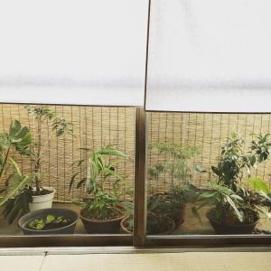 和室の眺めがオシャレになる!ベランダ露地の作り方、7つのテクニックを紹介