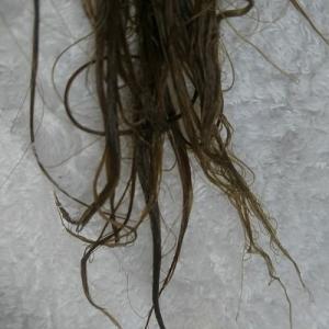 セルフ縮毛矯正して失敗しました。