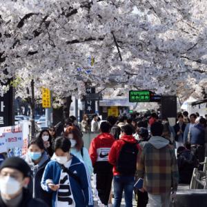 緊急事態宣言下の新大久保風景と韓国の花見風景