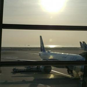 ANA修行で目覚めた国内線航空便の良さ《2021GW・航空便ログ》