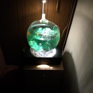 夜の金魚鉢