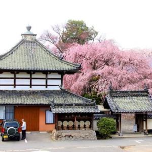 信州・篠ノ井 典厩寺(てんきゅうじ)のシダレ桜を・・・・・・!