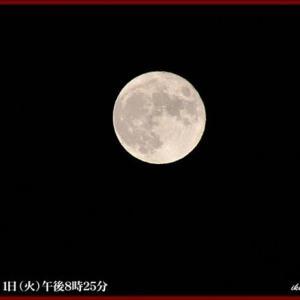 見上げてご覧、夜空の月を……!