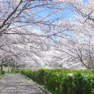 さくら(合唱):森山直太朗と宮城県第三女子高等学校音楽部