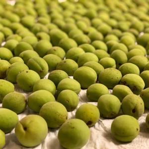 6月のアイスティー用に梅シロップの作り方