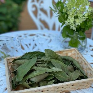オリンピックローレルティー 月桂樹の紅茶