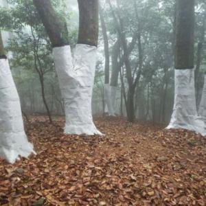 諭鶴羽神社の「アカガシの森」特別展。