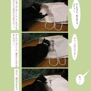 紙袋と四匹の猫たち(3)