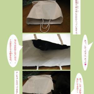 紙袋と四匹の猫たち。