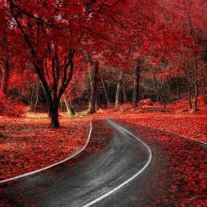 秋を感じる紅葉の風景写真