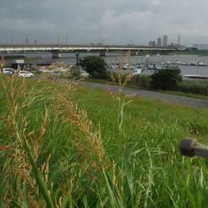 ハゼ釣り 2020-6 江戸川マルヤ