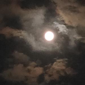 ハルと満月