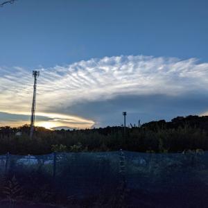 かなとこ雲とナツの近況