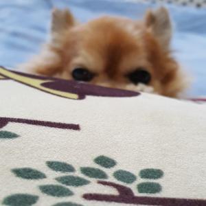 愛犬への愛情表現♡