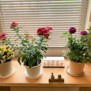 「花の画像を数秒見るだけでストレスは軽減される」- CareNetニュース