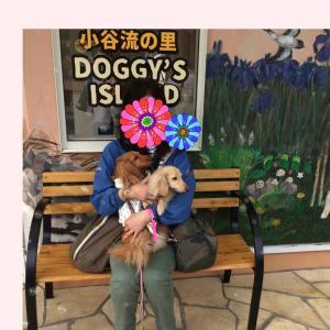 Doggy's   Island