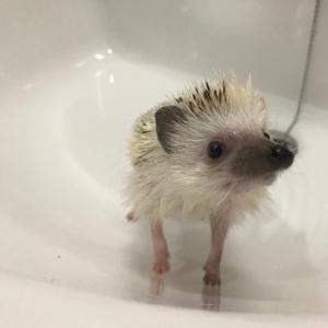 お風呂のおハリ