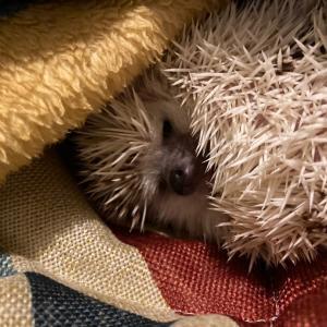 寝起きのおハリ