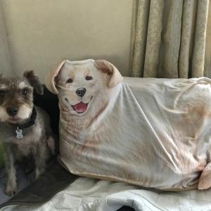 新しい家族が増えました(嘘)-布団収納袋