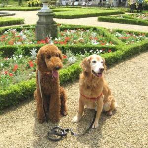 伊豆雲見ー犬連れに嬉しい薔薇園と露天風呂ありキャンプ場ー昔訪れたあの場所は?
