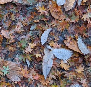 紅葉もキレイだけど丸裸の枝もまた風情があってイイものだ。