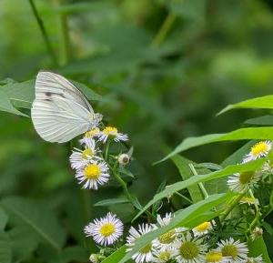 蝶が止まってくれるとなんだか嬉しい。