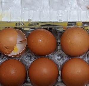 卵が割れてリュックが汚れた。