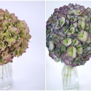 ドライフラワーになる秋色アジサイ(紫陽花)