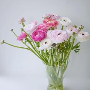 IKEAの花瓶にラナンキュラス☆飾るポイント