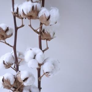 冬を楽しむ花