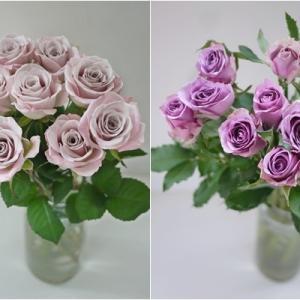 久々のバラ選び☆グレイッシュピンク