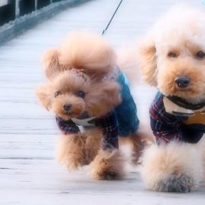 bebe&coco  :(´◦ω◦`):プルプル  ❺ 【鬼怒川温泉】吊り橋は苦手です!