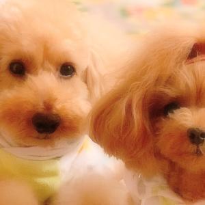 bebe&coco  °ʚ(*´˘`*)ɞ°  おやすみなさ〜い