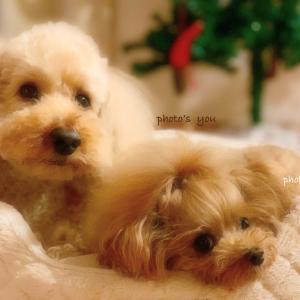 bebe&coco  (´・ω・`;)  寝落ち…気がつけば みんな夢の中