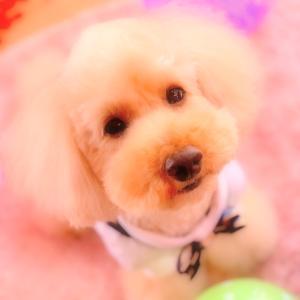 bebe&coco  (∩´∀`∩)  Happybirthday!!!