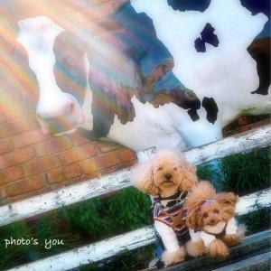 bebe&coco  (٩Üو)  【マザー牧場】を応援しまーす