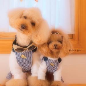 bebe&coco  ☆~(ゝ。∂)  ポチッとした《部屋着》だよ!