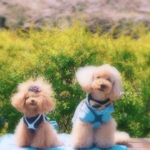 bebe&coco  ✿゚❀.(*´▽`*)❀.゚✿  散りゆく花びらもス・テ・キ!