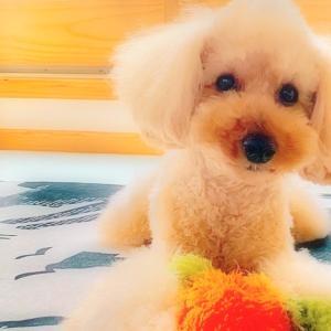 """bebe&coco  (๑ˇεˇ๑)•*¨*•.¸¸♪  【紫陽花】見に行きたいなぁ〜"