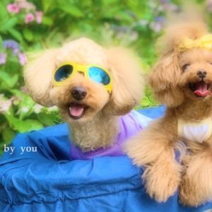 """bebe&coco  (*°︶°*)ノ""""❁.*・゚  あわてて【あじさい屋敷】へ"""