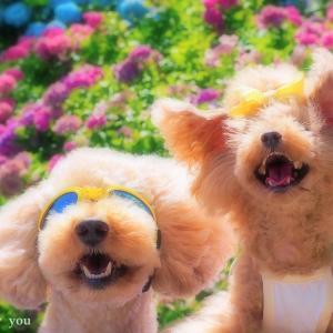 bebe&coco  (^ω^;);););)  ② ちょっと遅かった【あじさい屋敷】