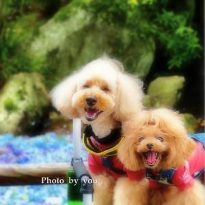 bebe&coco  (*◕ᴗ◕*)  ❸ 【雨引観音】へお参りです