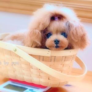 bebe&coco  (((≫_≫)))  こわい!