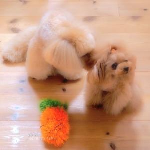 bebe&coco  (*˘ ³˘)♥   ちゅ〜