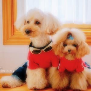 bebe&coco  (*ˊ˘ˋ*)。♪:*°るんるん  ❸ 久しぶりの【ドッグラン】です